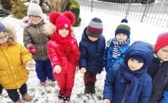 grupa Tygryski - Dokarmianie ptaków zimą